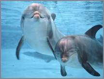 Eternamente delfines...